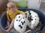 A Life with Dalmatians